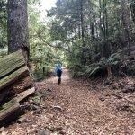 Barrington Tops Corker Trail